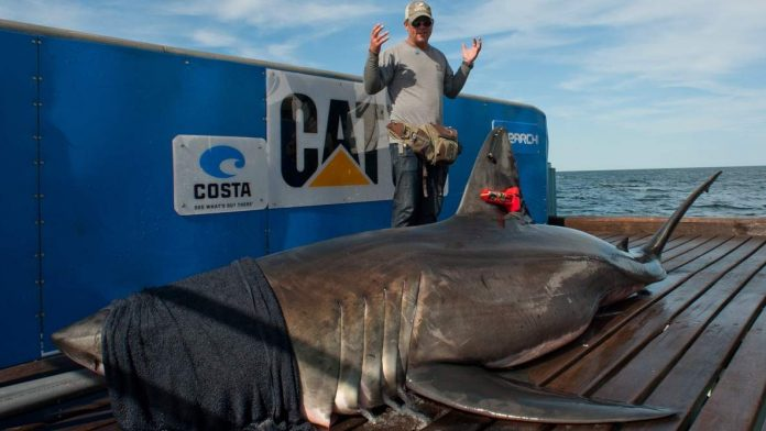 Scientists Attach Camera To Monitor Mysterious White Shark Cafe Trip
