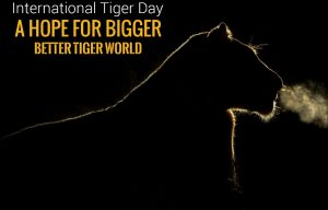 International Tiger Day 4