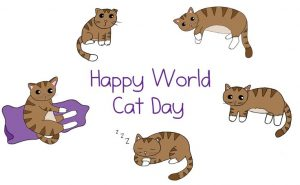 International Cat Day Quotes
